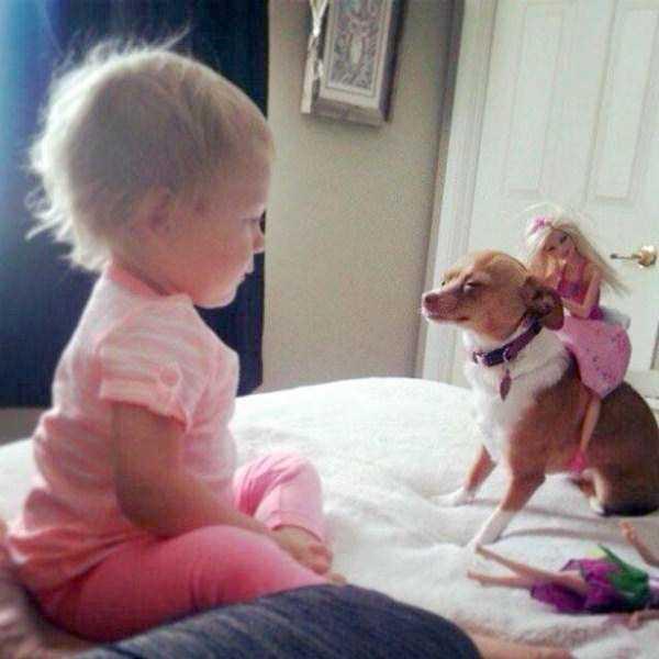 tolerant-patient-pets (8)