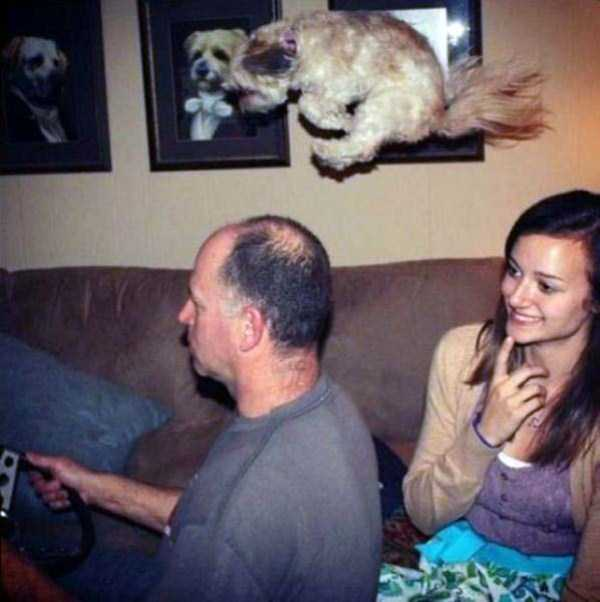 perfectly-timed-photos (3)