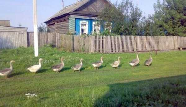 russian-village-funny-pics (10)