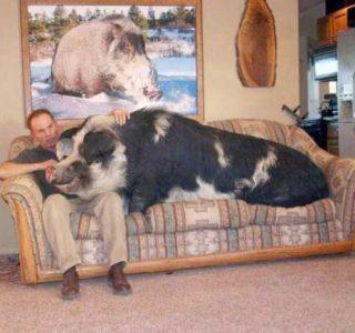 Unconventional Pets (26 photos)