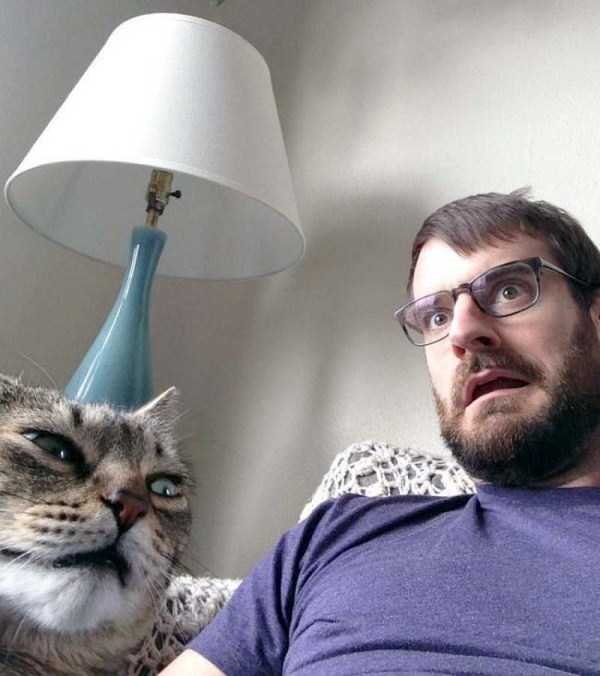 cats-hate-selfies (13)