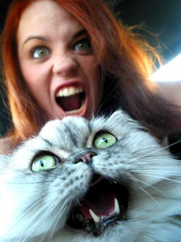 cats-hate-selfies (2)