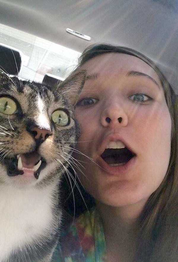 cats-hate-selfies (21)