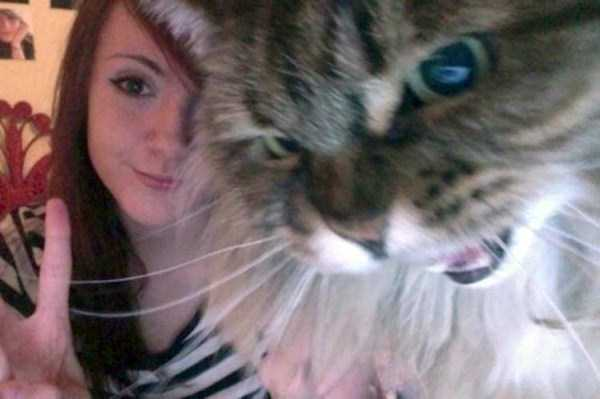 cats-hate-selfies (24)