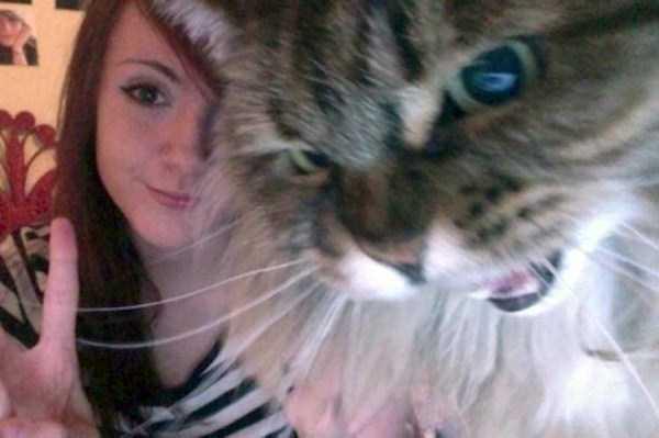 cats-hate-selfies (24)