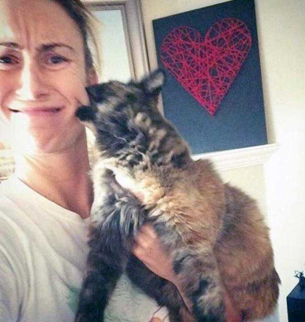 cats-hate-selfies (3)