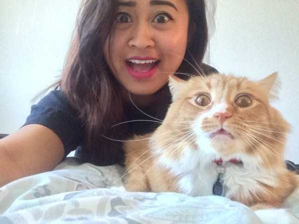 cats-hate-selfies (32)