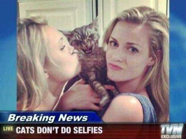 cats-hate-selfies (4)