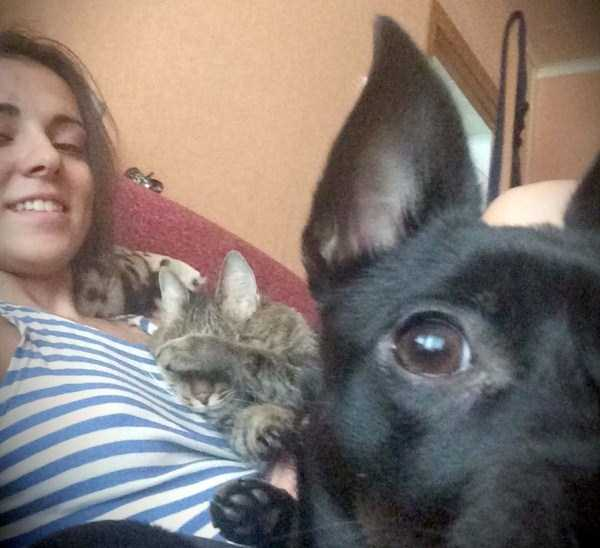 cats-hate-selfies (9)
