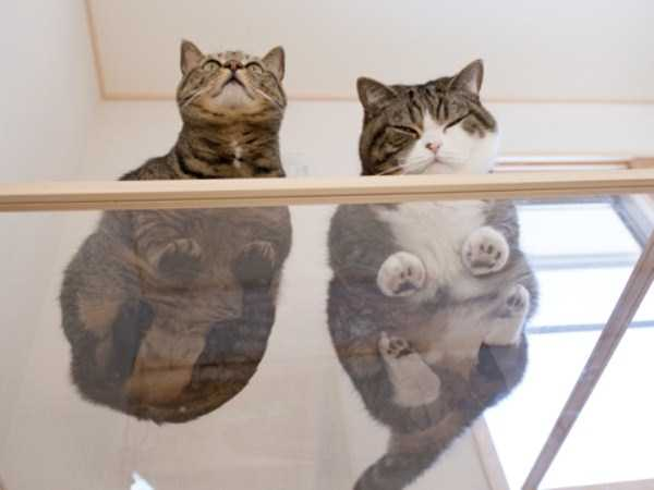 cats-on-glass (10)