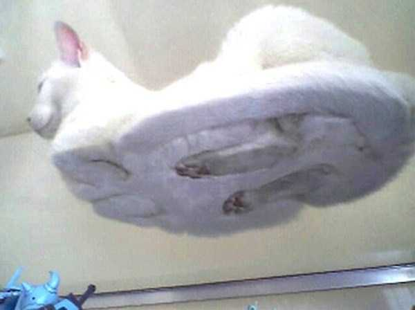 cats-on-glass (17)