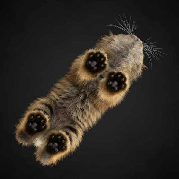 cats-on-glass (18)