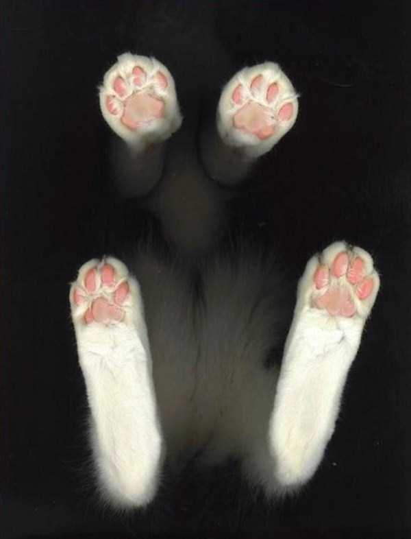 cats-on-glass (2)