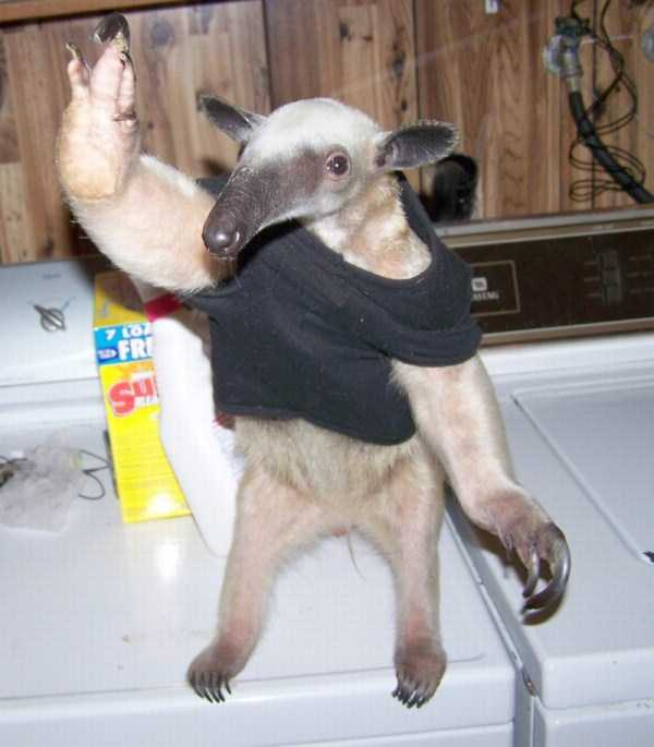 dressed-animals (11)