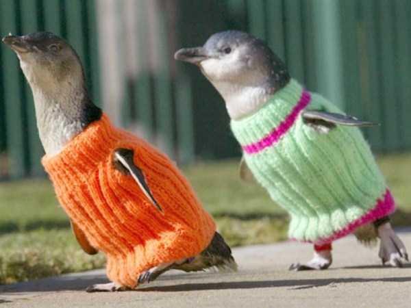 dressed-animals (12)