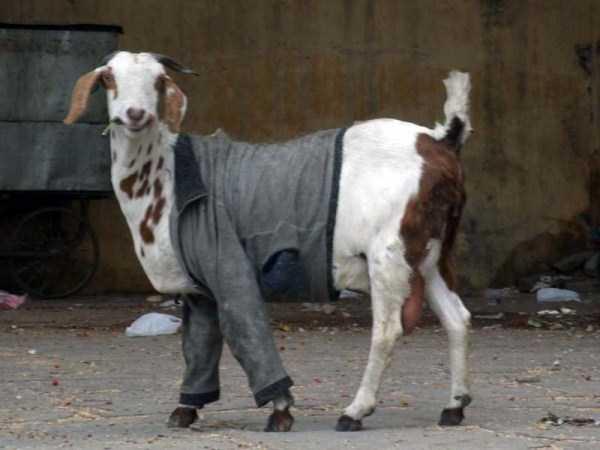 dressed-animals (13)