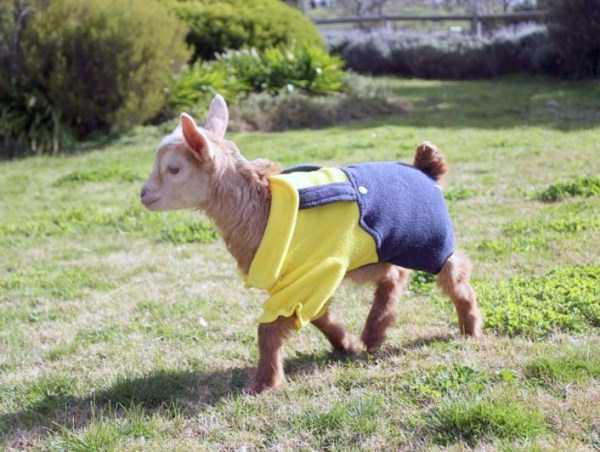 dressed-animals (14)