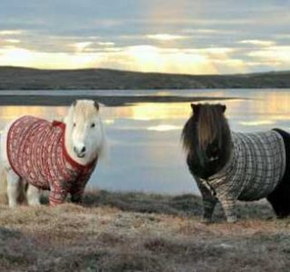 Dressed Animals: Ridiculous or Cute? (25 photos)