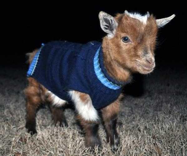 dressed-animals (2)