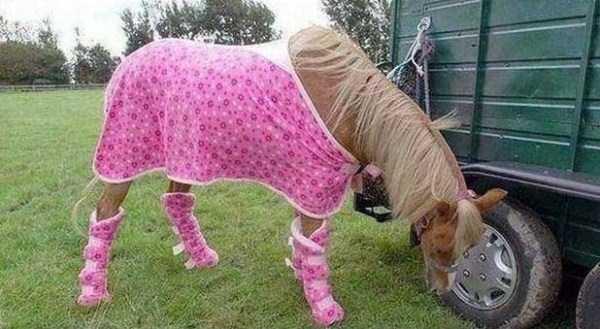 dressed-animals (21)