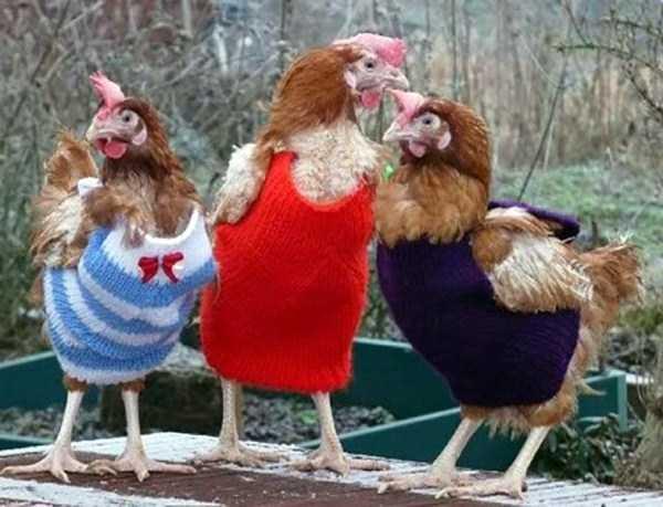 dressed-animals (3)