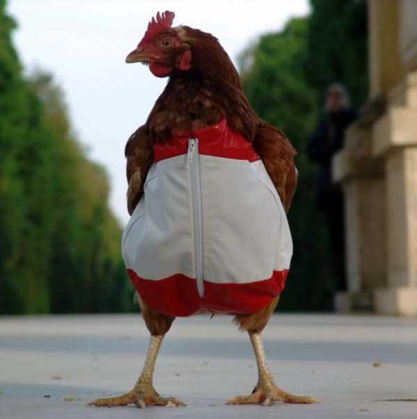 dressed-animals (4)