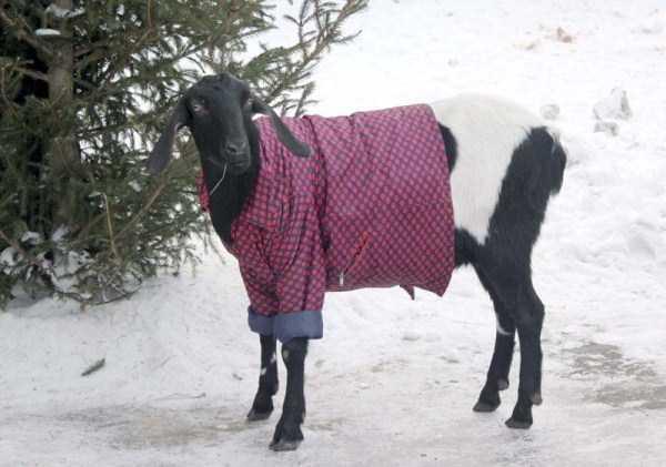 dressed-animals (6)