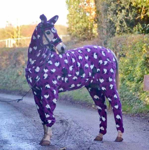 dressed-animals (7)