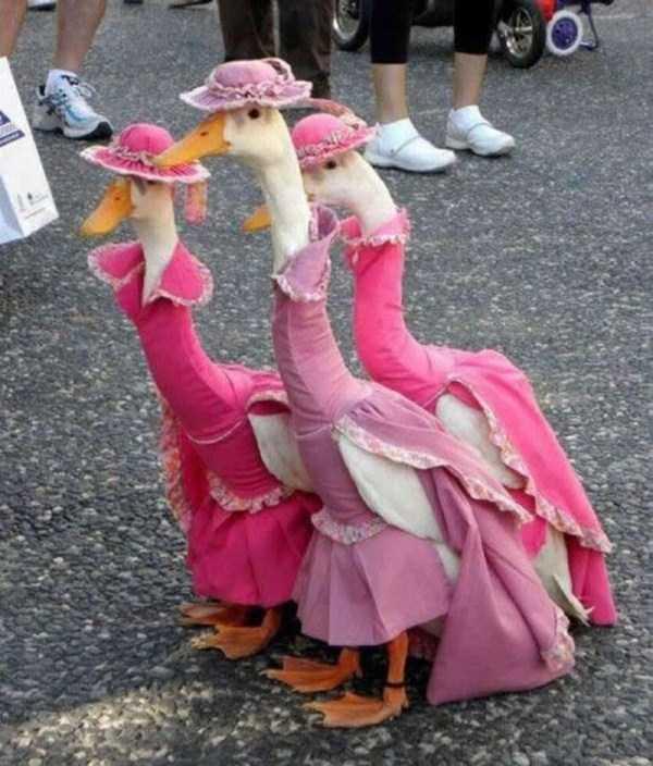 dressed-animals (9)