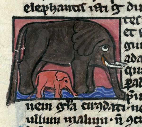 medieval-elephants-paintings (20)