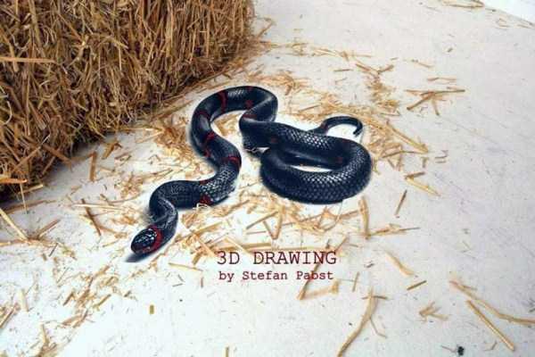 realistic-drawings-stefan-pabst (17)