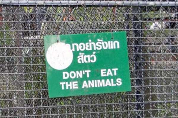 thailand-funny-pics (19)