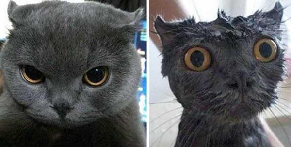 wet-pets (21)