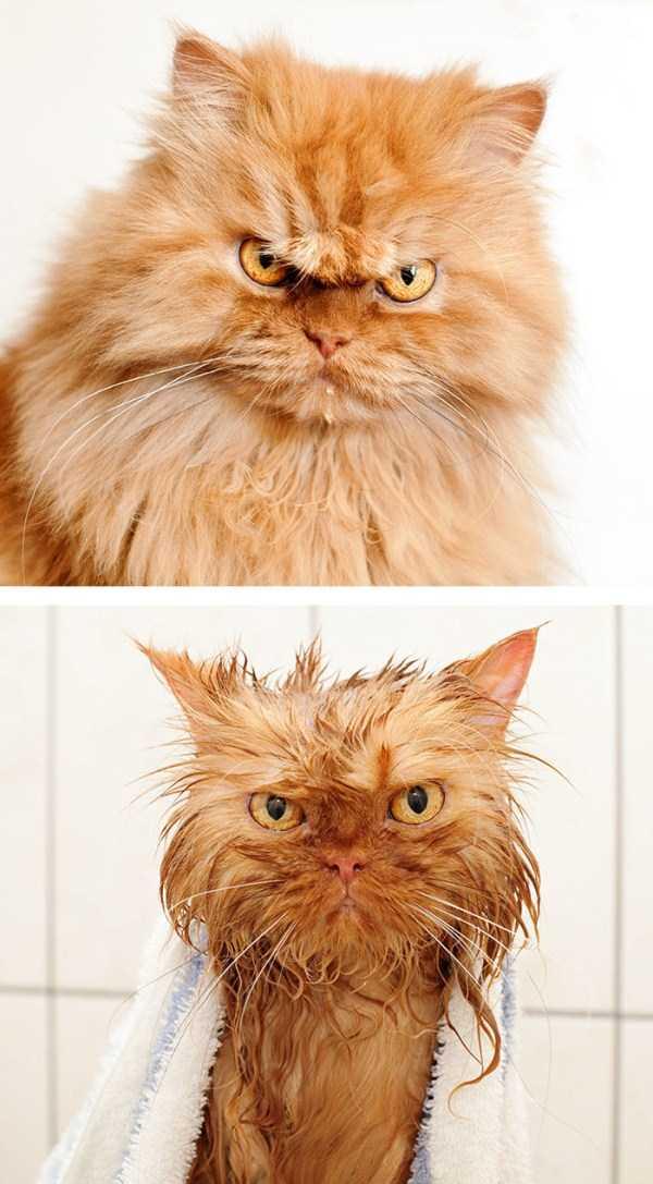 wet-pets (37)