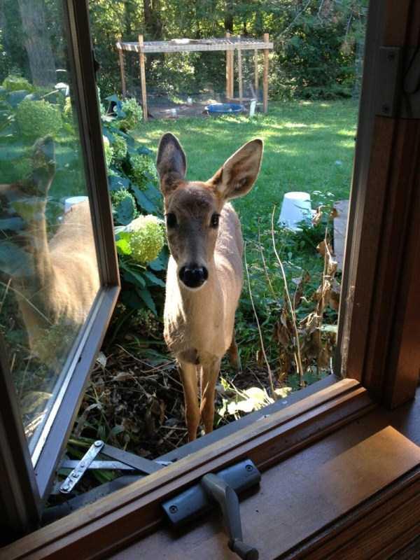 wild-animals-encounters (12)
