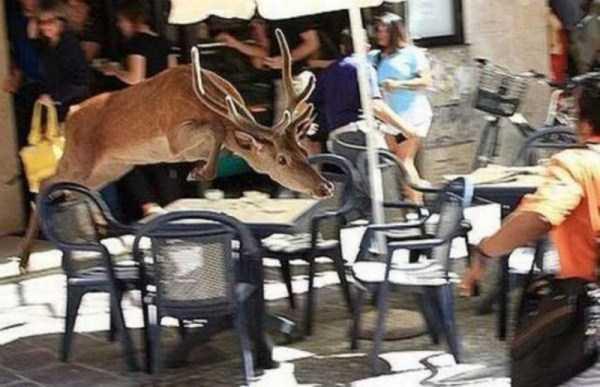 wild-animals-encounters (14)