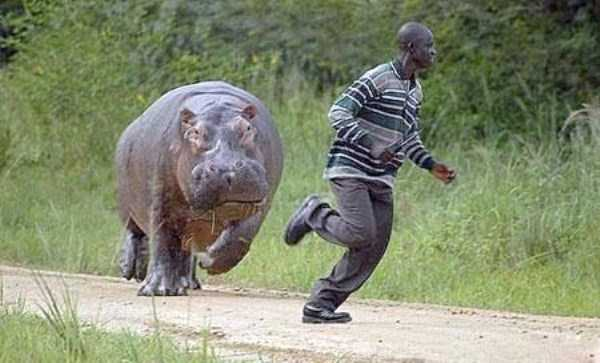 wild-animals-encounters (23)