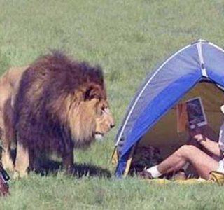 30 Unexpected Encounters With Wild Animals (30 photos)