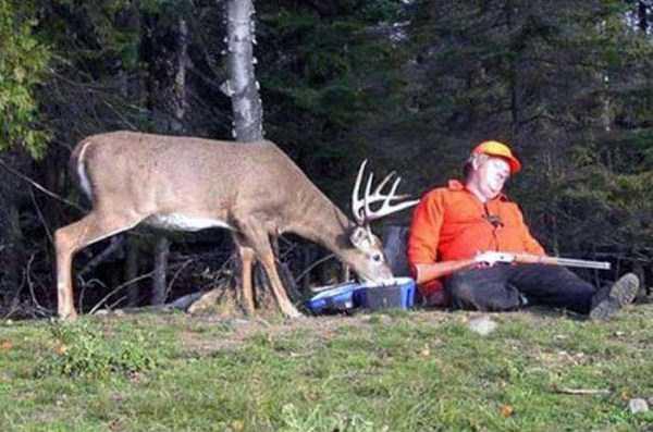 wild-animals-encounters (28)
