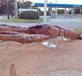 25 More WTF Photos, Because Why Not!? (25 photos)
