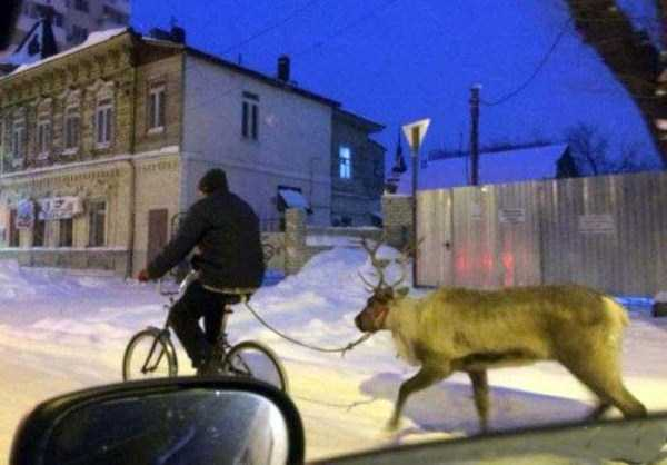 wtf-russia-pictures (14)