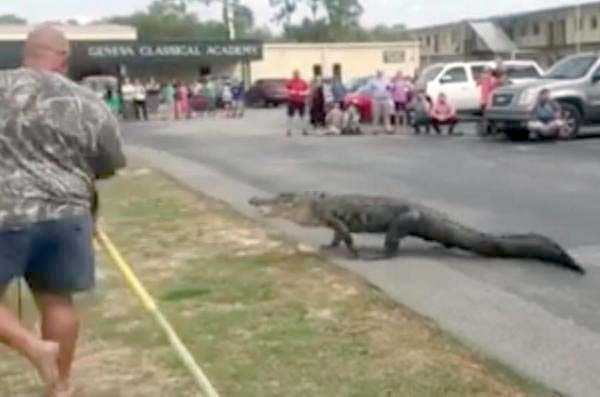alligators-in-florida (1)