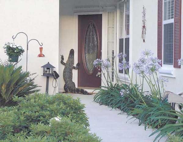 alligators-in-florida (14)