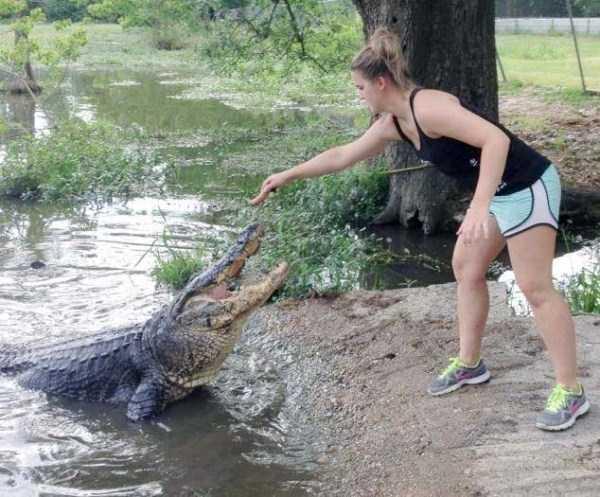 alligators-in-florida (18)