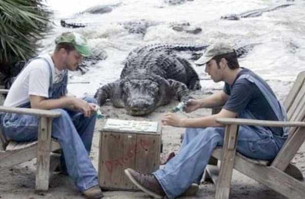 alligators-in-florida (4)
