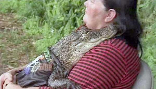 alligators-in-florida (6)