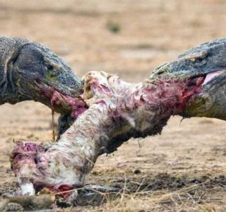Mildly Disturbing Pictures of Animals Eating Other Animals (35 photos)