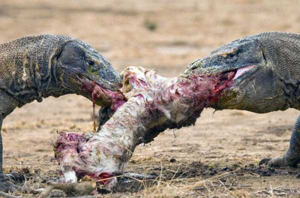 animals-eating-animals (11)