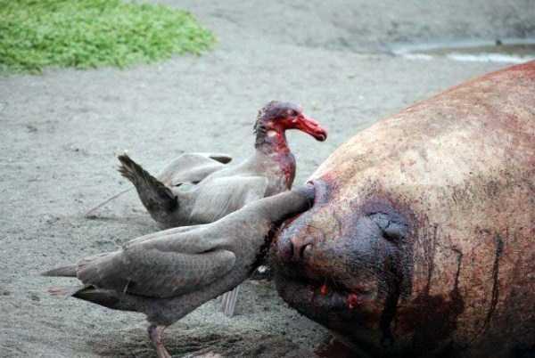 animals-eating-animals (25)