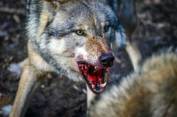 animals-eating-animals (4)